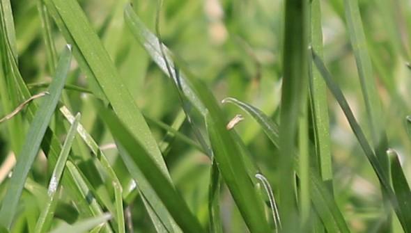 Rasen-Canon-Ausschnitt
