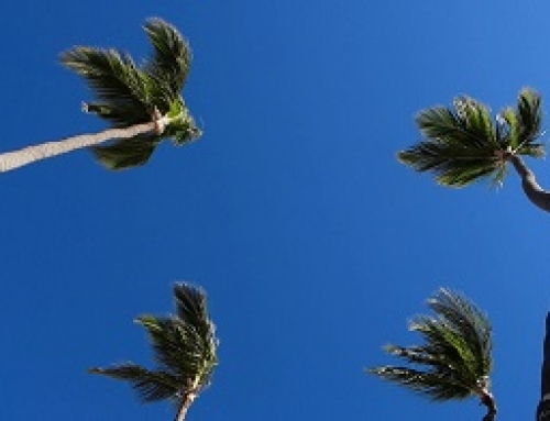 Palms – group of four in the wind